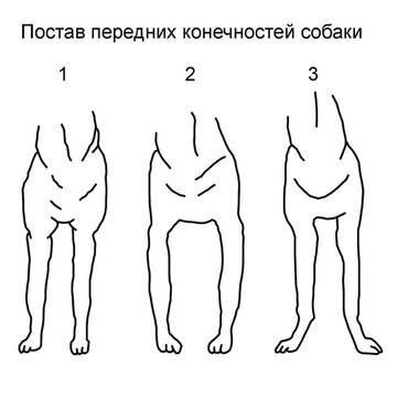 Как исправить постав скакательных суставов боли в суставов
