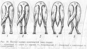 Слабые скакательные суставы у алабая лучезапястный сустав анатомия